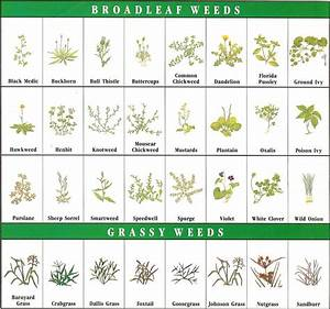 Weed Identification Chart - Bing images