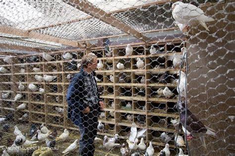 cuisiner du pigeon en haute marne le pigeon s 39 est fait un renom cuisine