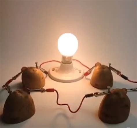 potato light science fair projects images