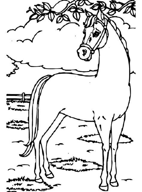 Paard (7) is negenhonderdtweeenveertig keer bekeken. Kids-n-fun | Kleurplaat Paarden Paard