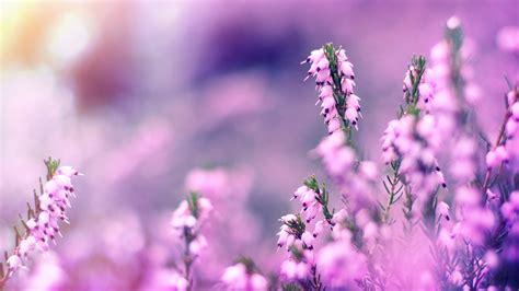 ways   lavender   wedding