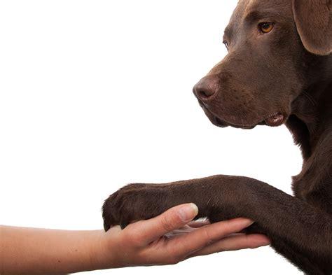 vegane ernaehrung fuer hunde der barf spezialist aus