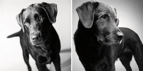 Kā noveco suņi: aizkustinošs fotoprojekts - Puaro.lv