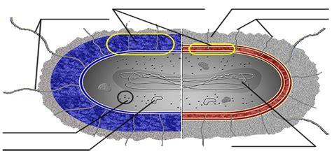 Cells Alive Activity
