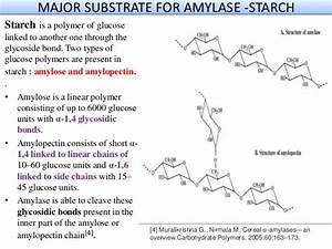 Presentation on Amylase enzyme