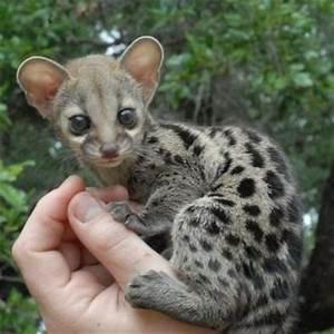 Cutest Baby Exotic Animals Ever | www.pixshark.com ...