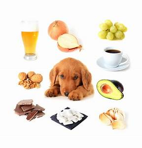 Schneckenkorn Giftig Für Hunde : vorsicht giftige lebensmittel f r ihren hund ~ Lizthompson.info Haus und Dekorationen
