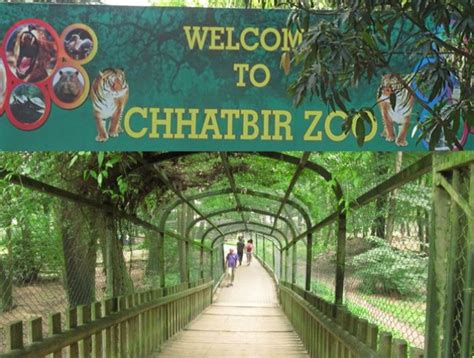 zoo chhatbir chandigarh walk birds gharials visitors soon between start chandigarhx exploring planned aviary park