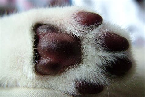 what cat breed went into my cat look at their paws