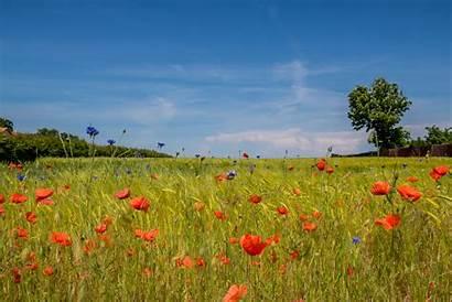 Steppe Flower Nude Field Lt