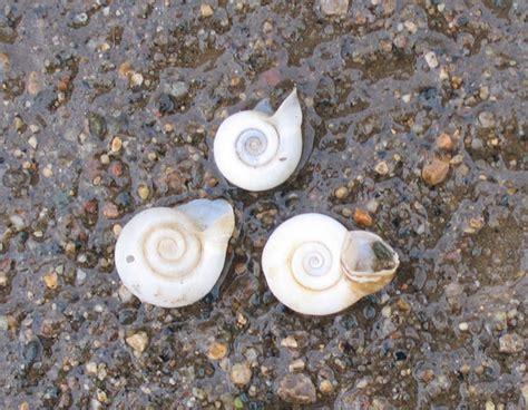 good  leeches  snails