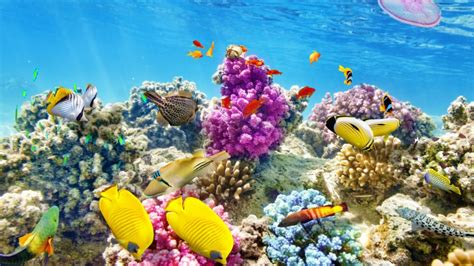 coral reef wallpaper wallpaper underwater world coral reef tropical Underwater