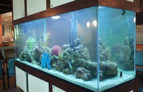 bureau aquarium used aquariums 28 images fish tanks for sale free