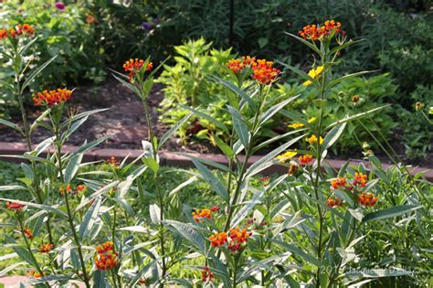 houston plants and garden creating a butterfly habitat garden in houston