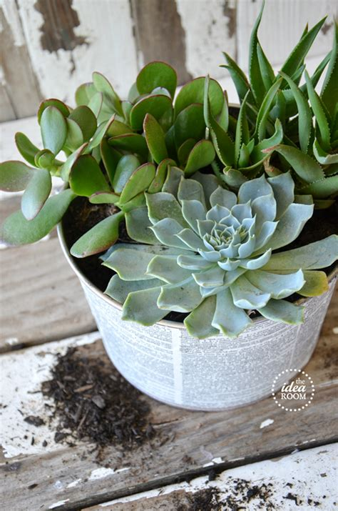 grow  succulent garden teachers gift  idea room