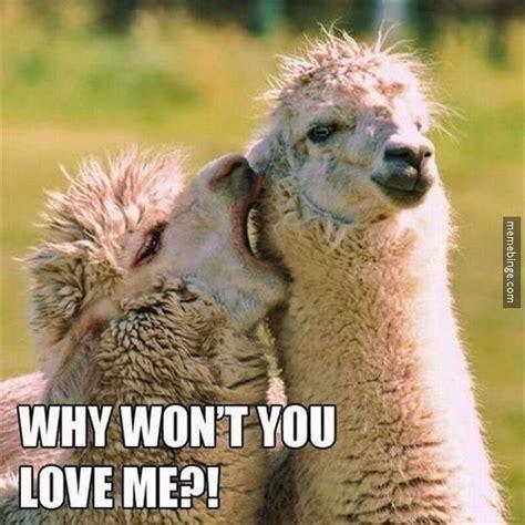 Love Me Meme - why won t you love me ian