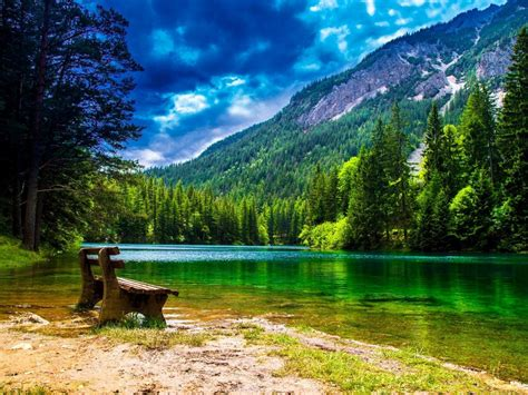 wonderful mountain landscape  green pine forest green