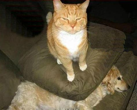 cats being bullied dogs powered