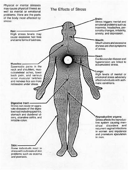 Stress Effects Does Ways Affects Stressed Diagram