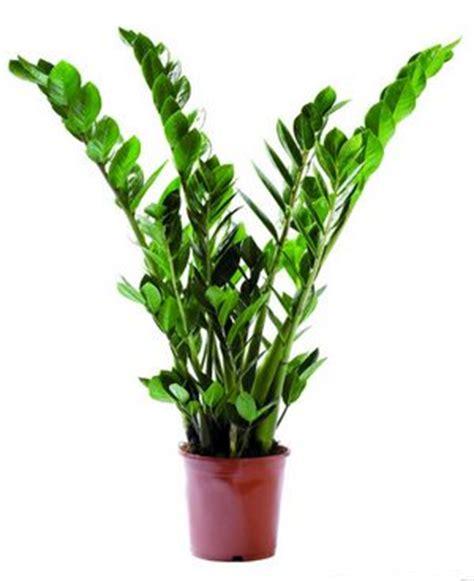 plantes vertes d int 233 rieur