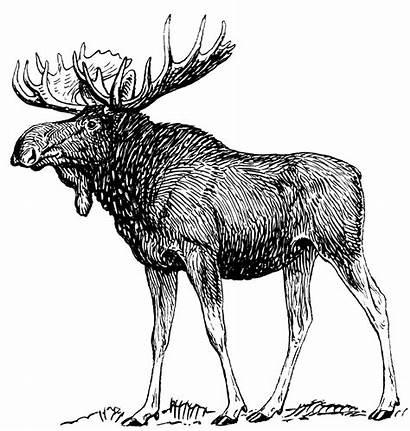 Moose Clip Svg Onlinelabels