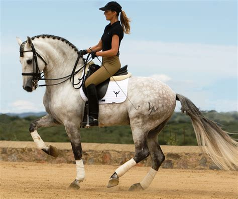 dressage horse horses andalusian pretty equestrian