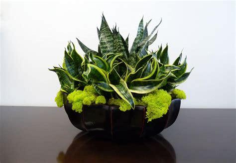 designer plants envirogreenery plants interior plant portfolio