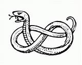 Snake Coloring Pages Realistic Garter Anaconda Drawing Cartoon Getdrawings Fangs Getcoloringpages Printable Popular Name Cute sketch template