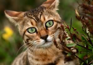 types of big cats the different types of cat diseases about cats feline