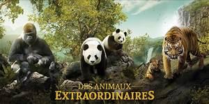 Billet Zoo De Beauval Leclerc : ce ouest manpower billetterie zoo parcs animalier ~ Medecine-chirurgie-esthetiques.com Avis de Voitures