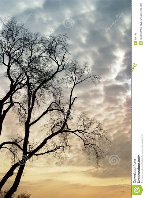 Sad Tree Stock Image Image Of Cloud, Nature, Dark, Yellow