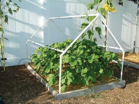 cold frames for gardening gardening tips a cold frame to build