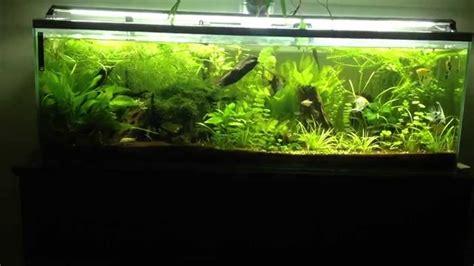aquarium plant 233 communautaire type amazonien aquascaping tank 300 litres