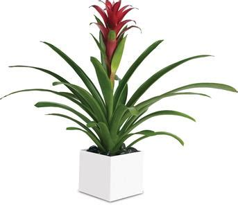 order  indoor plants  gifts   delivery