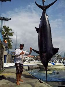 International Fishing News: HAWAII: caught an huge 1,211 ...