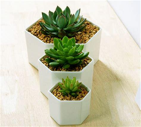 small flowering plants for pots great idea for small plants simple hexagon ceramic flower pot white succulents planter flowerpot