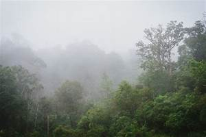 What Are The Effects Of Deforestation In The Amazon