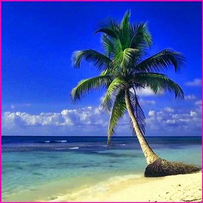 Palm Gifs Animated Nature Playa Funny Ocean