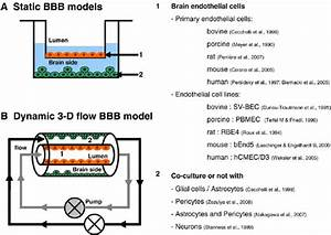 Modeling the blood-brain-barrier and neurovascular unit in ...