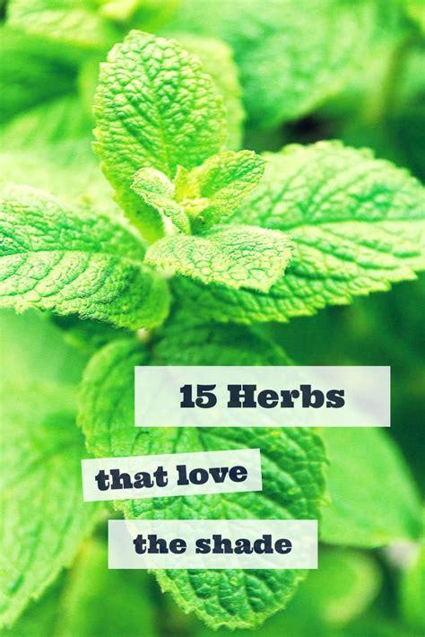 sun herbs 15 herbs that thrive in shade gt http www hgtvgardens com herbs 15 herbs that grow in the