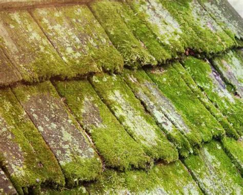 Grow Your Own Moss Dryer Vent Through Roof Code Put A Over My Deck Metal On Houses Is Asbestos Garage Dangerous Drop Per Foot Owens Corning Roofing Warranty Claim How To Finish Shingle Peak Red Inn Cranberry Twp Pa