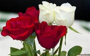 Begleitpflanzen Für Rosen : preview ~ Lizthompson.info Haus und Dekorationen