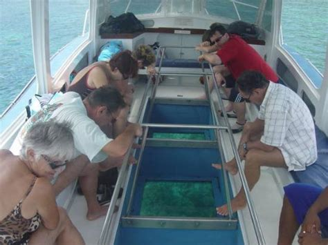 Glass Bottom Boat Victoria by Glass Bottom Boat Coral And Fish Viewing Picture Of