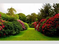 Flower Garden Wallpapers Hd Wallpapers Beautiful