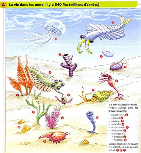2225854270 histoire de la terre eme evolution des 234 tres vivants histoire de la terre l