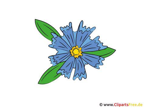 kornblume bild clipart