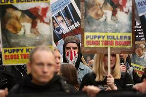 Animal rights group ends 15-year campaign against ...