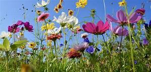 Garten Blumen Bilder : welche blumen bl hen im juni haus garten ~ Whattoseeinmadrid.com Haus und Dekorationen