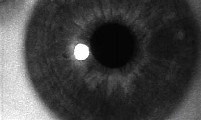 Eye Iris Gifs Montage