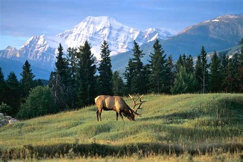 Photos: Nosing Ahead--Elk Camp 2013 - Outdoor Hub
